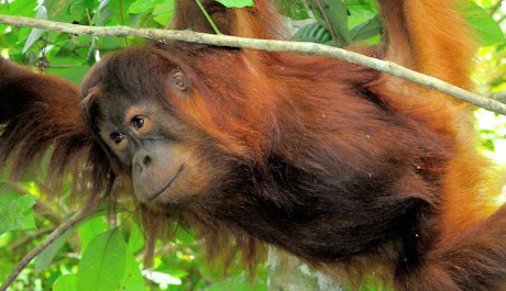 Вред пальмового масла для животных