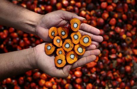 Плоды масличной пальмы крупным планом