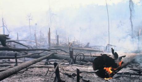 Для выращивания пальм вырубают тропические леса