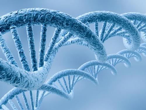 Генетика и повышенный холестерин в крови