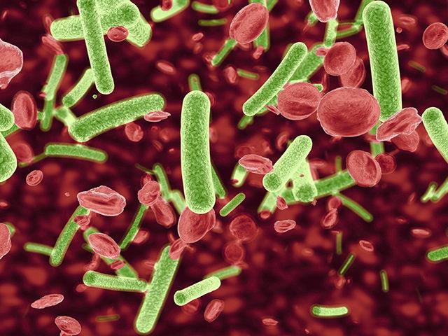 Повышенные лейкоциты в крови