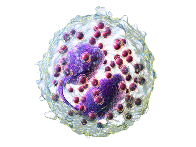 eozinofilyi-norma